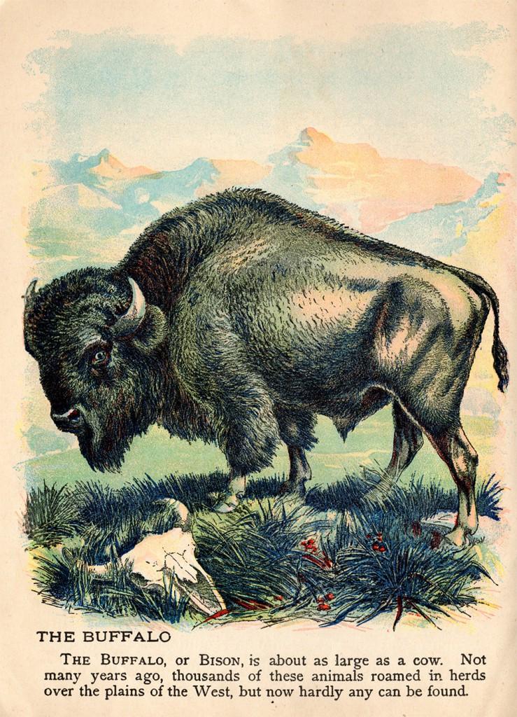 http://hedgehogstudio.com/wp-content/uploads/2016/05/bisonweb-739x1024.jpg