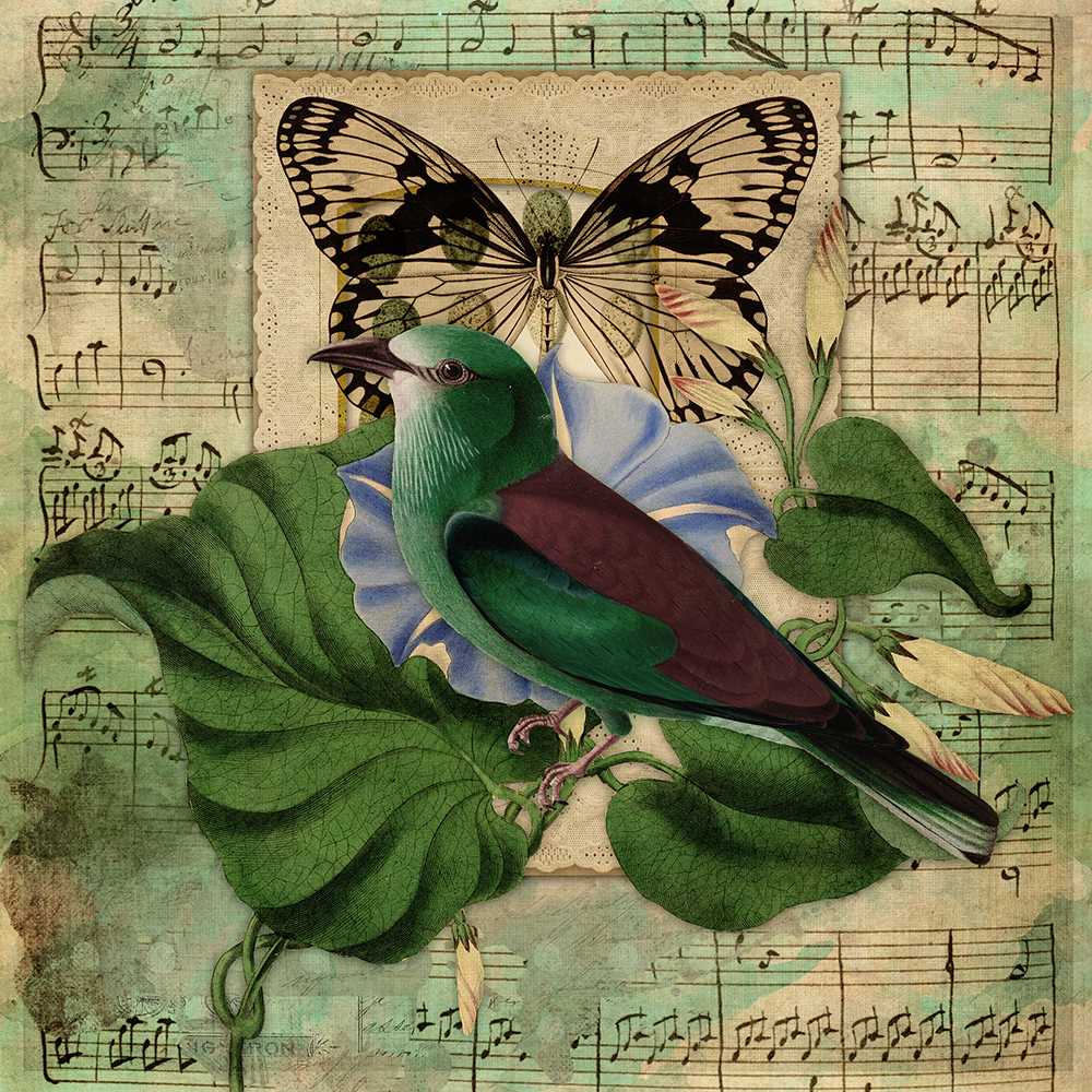 birdcollagegreen8x8web